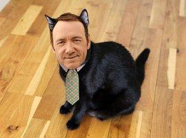 Кевин Спейси сыграет кота в комедии Барри Зонненфельда