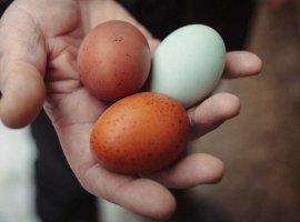 Фотография куриного яйца установила новый рекорд Instagram исобрала 23млн лайков