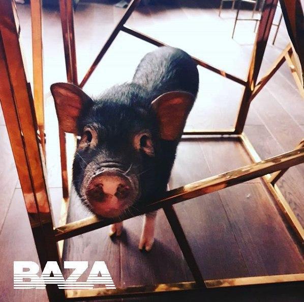 «Нажрался как свинья»: вМоскве поросенок Борис объелся экстази | Канобу - Изображение 4524