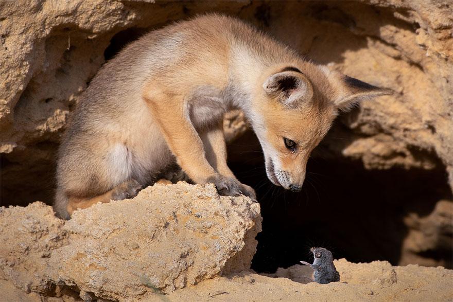 Позитивная галерея: 40 фото сконкурса насамый смешной снимок дикой природы   Канобу - Изображение 3970