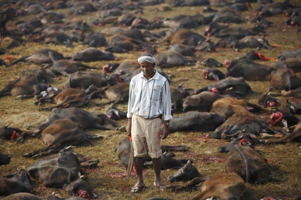Животная жестокость | Канобу - Изображение 3