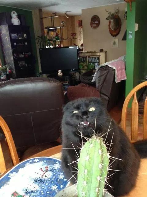 Ненависть, грусть, безысходность и коты. Вспоминаем самые забавные фотографии ко дню кошек!. - Изображение 9