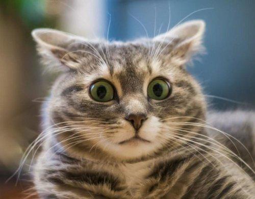 Хотите сломать кота? Прикиньтесь котом вInstagram