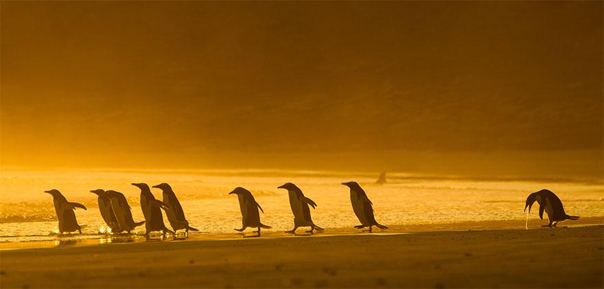Позитивная галерея: 40 фото сконкурса насамый смешной снимок дикой природы   Канобу - Изображение 3966