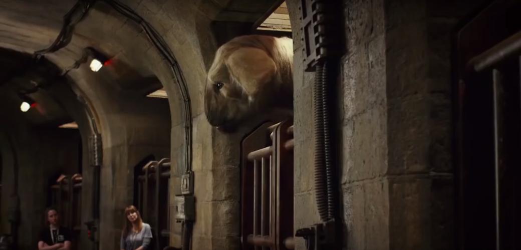 Больше милых животных! В «Последних джедаях» появится гигантская овца. - Изображение 1