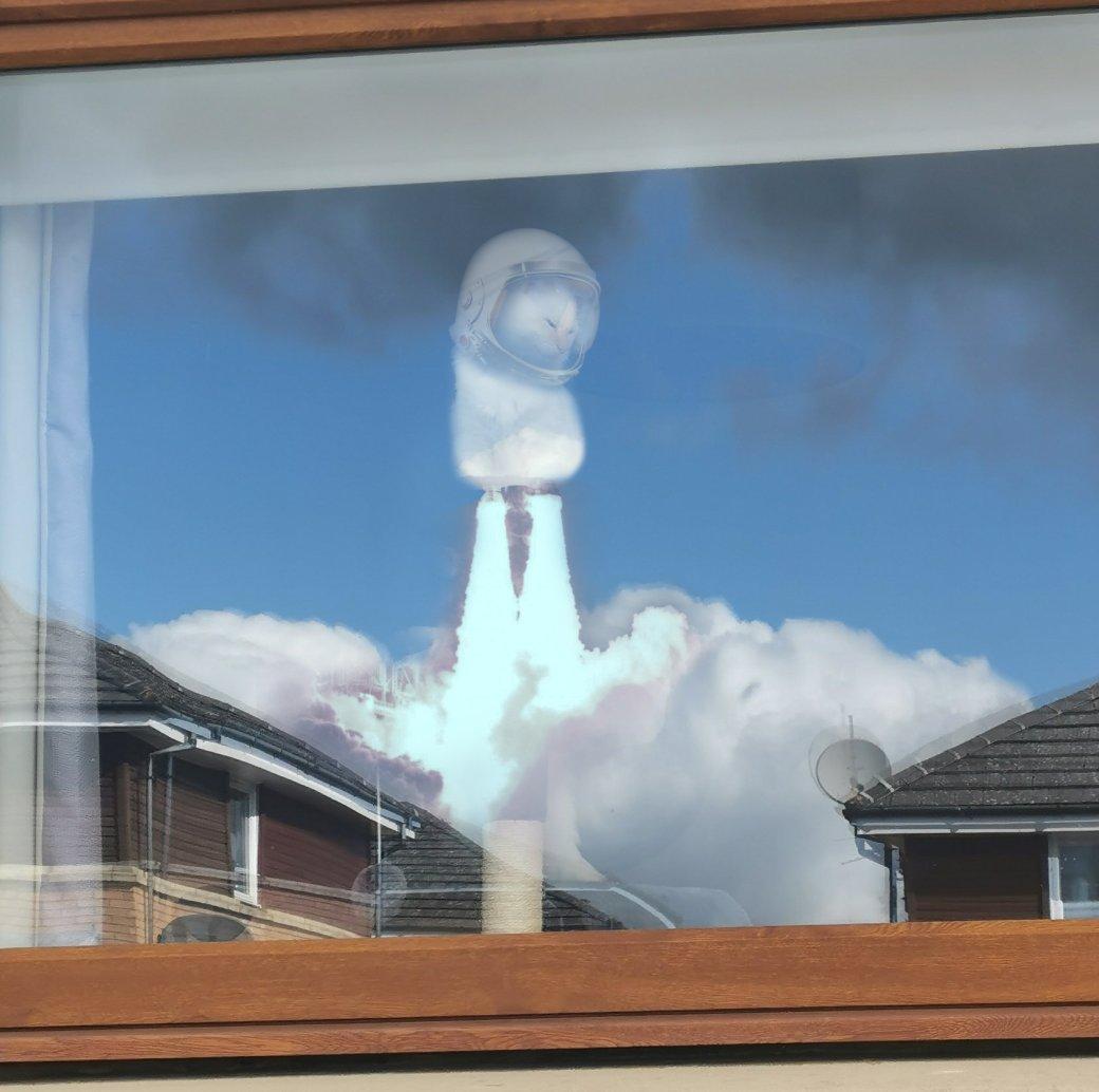 «Божественная кошка»: из-за оптической иллюзии кот воблаках стал мемом | Канобу - Изображение 9427
