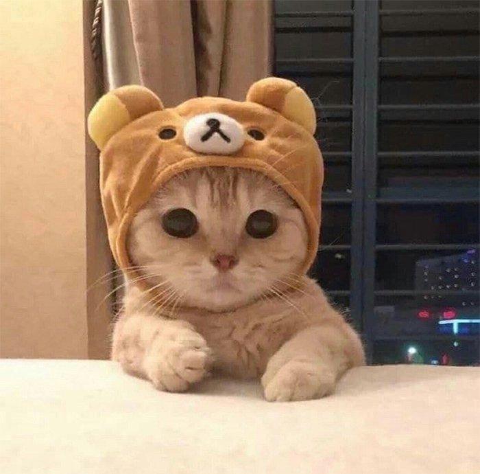 Котов сделали героями культовых фильмов: это новый флешмоб винтернете | Канобу - Изображение 6973
